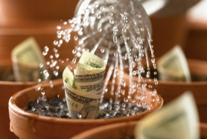money-growing-in-pots-sri